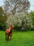 Foal-Bucolic-Horse-Prairie-Eat-Field-Flowers-3644868